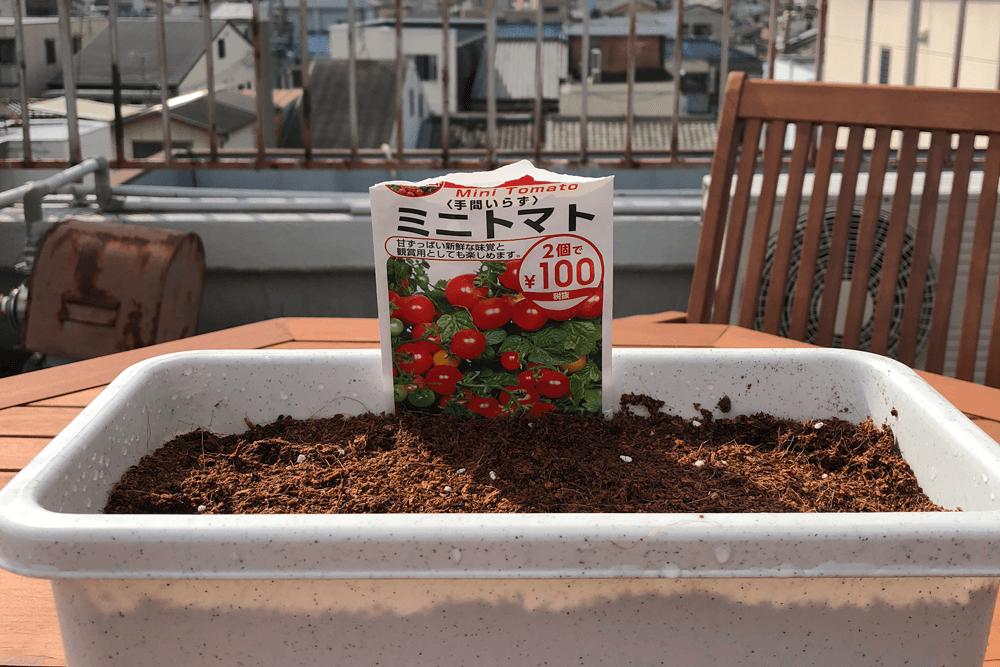 ミノトマト栽培開始